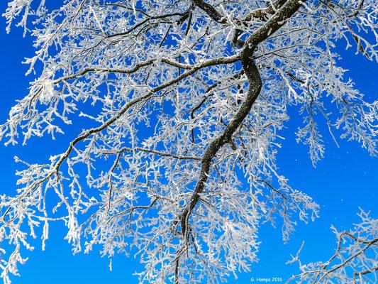 Winterland 38