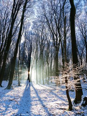 Winterland 11