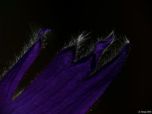 Blumenzauber 26