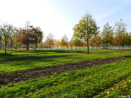 Herbstwald 31