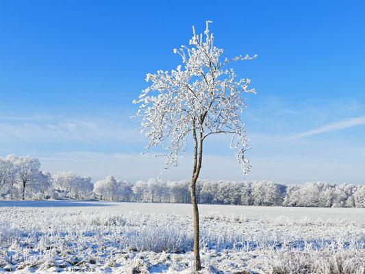 Winterland 17