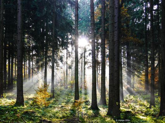 Herbstwald 36