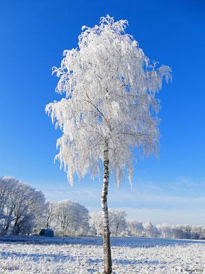Winterland 19