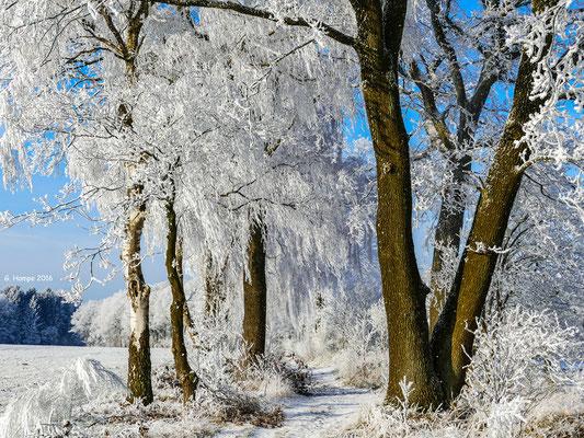 Winterland 31