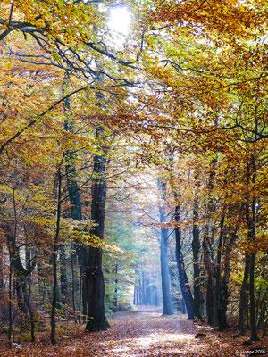 Herbstwald 30