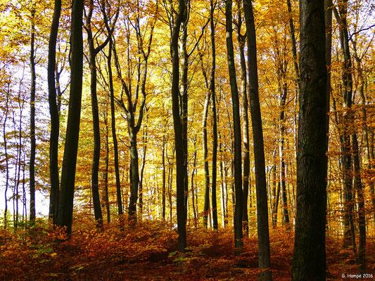 Herbstwald 14