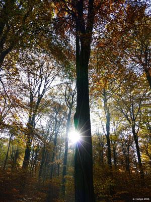Herbstwald 27