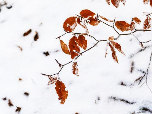 Winterblätter 2