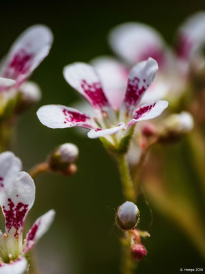 Blumenzauber 56