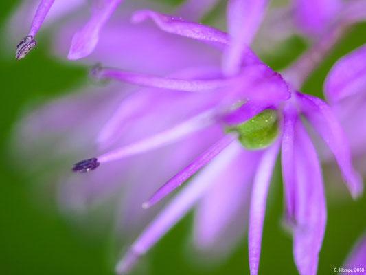 Blumenzauber 71