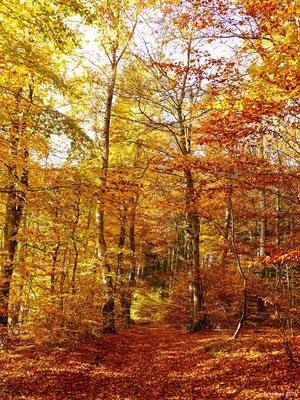 Herbstwald 40