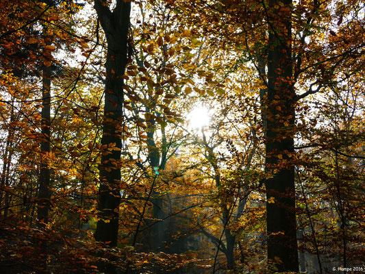 Herbstwald 15