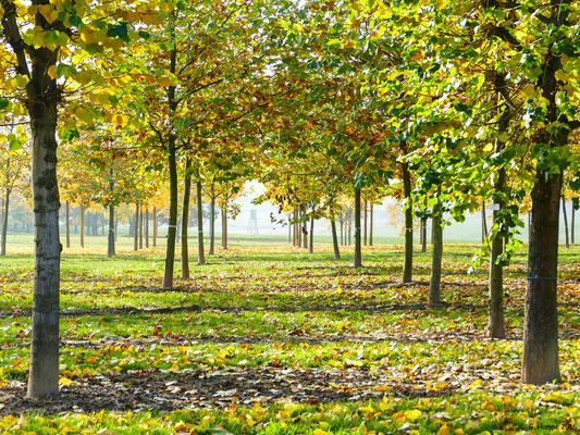Herbstwald 33