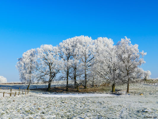 Winterland 48