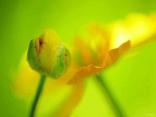 Blumenzauber 51