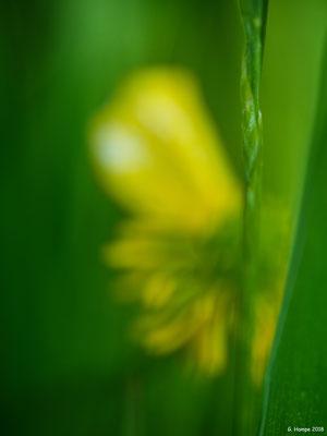 Blumenzauber 76