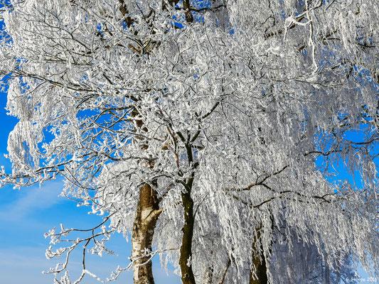 Winterland 33