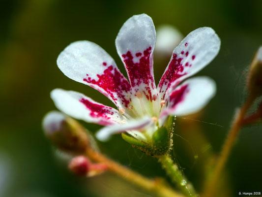 Blumenzauber 59