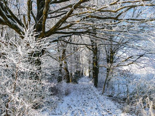 Winterland 22