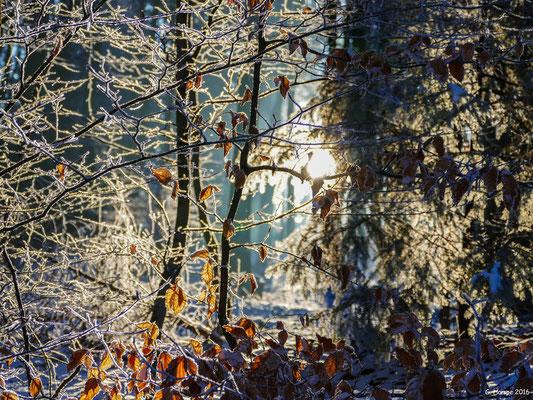 Winterland 6