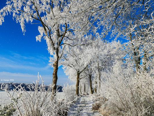 Winterland 30