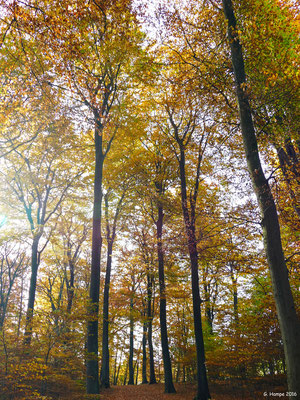 Herbstwald 25