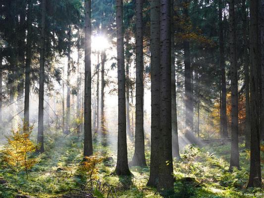 Herbstwald 39