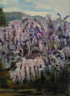 """""""Il giardino dei glicini"""""""