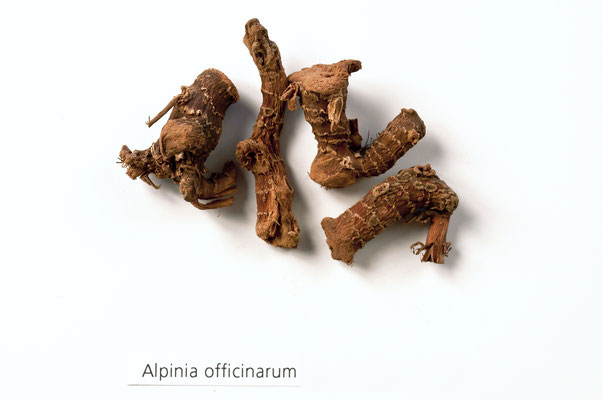 alpinia_officinarum_001