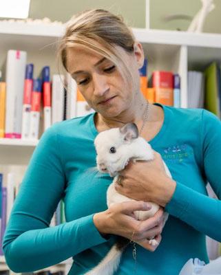 Tierheilpraktiker Kaninchen Meerschweinchen Chinchillas