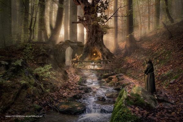 Wächter des Waldes