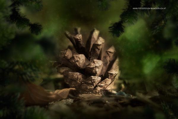 Tief im Wald 1