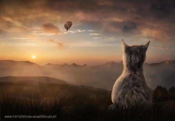 Der Traum der Katze