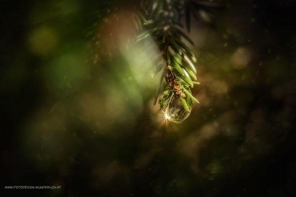Tief im Wald 5
