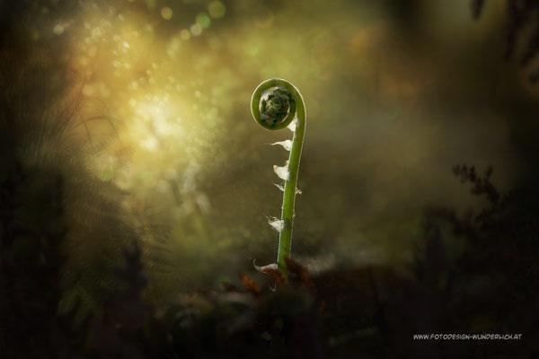 Tief im Wald 3