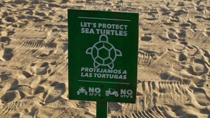 ... wir sehen weder Schildkröten...