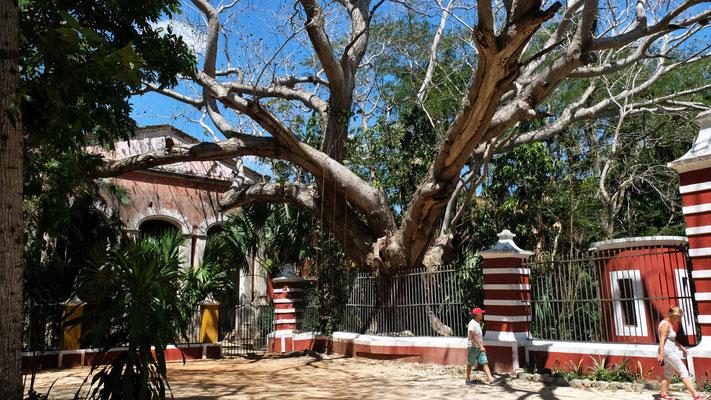 Die Hacienda Santa Rosa....