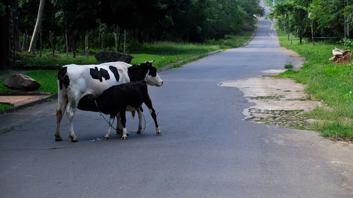 Gestillt wird mitten auf der Strasse. Stören lassen sich die Beiden nicht von uns.