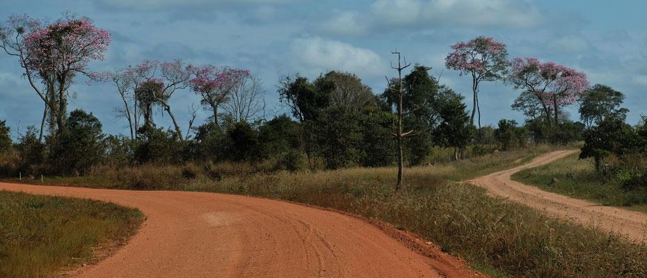 Das sind dann wieder die  Bolivianischen Strassen im Pantanal