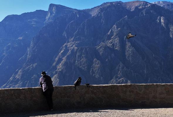 Ein Condor schwebt vorbei