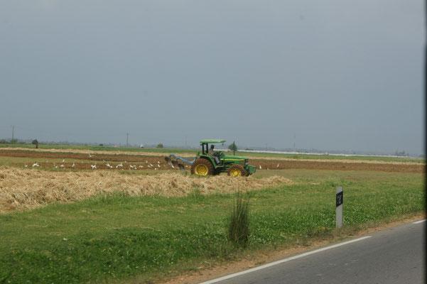 Traktore gibt's