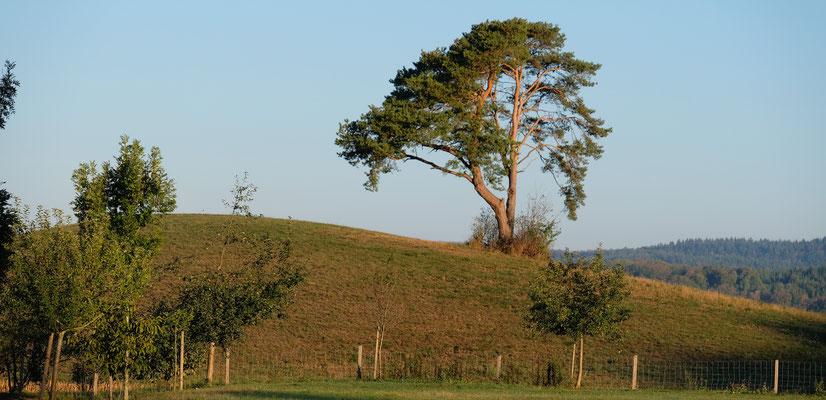 """Die ersten Sonnenstrahlen treffen auf """" unseren"""" Baum beim Camping in Orsingen"""