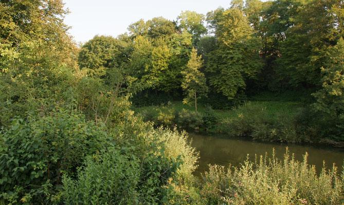 Der Neckar fliesst gleich neben uns vorbei.