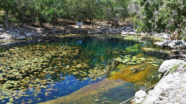 Seerosen schmücken die Cenote