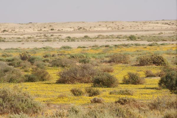Es grünt und blüht in der Wüste