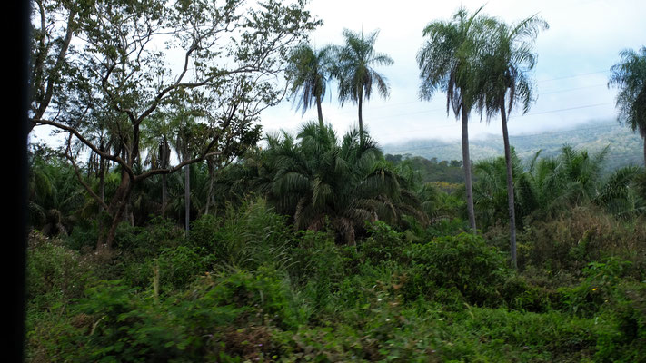 ...den Dschungel
