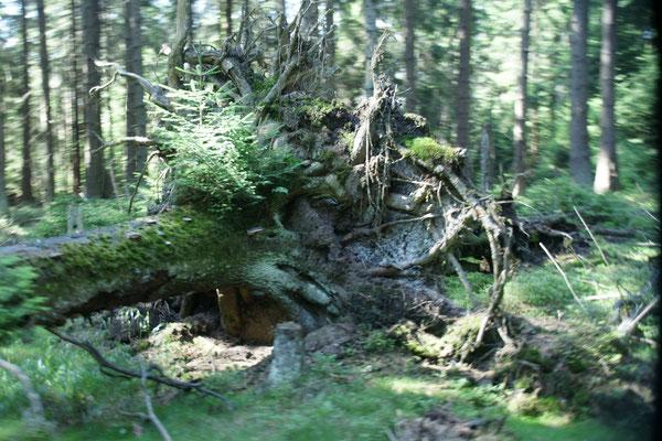 Wieder ein Märchenwald