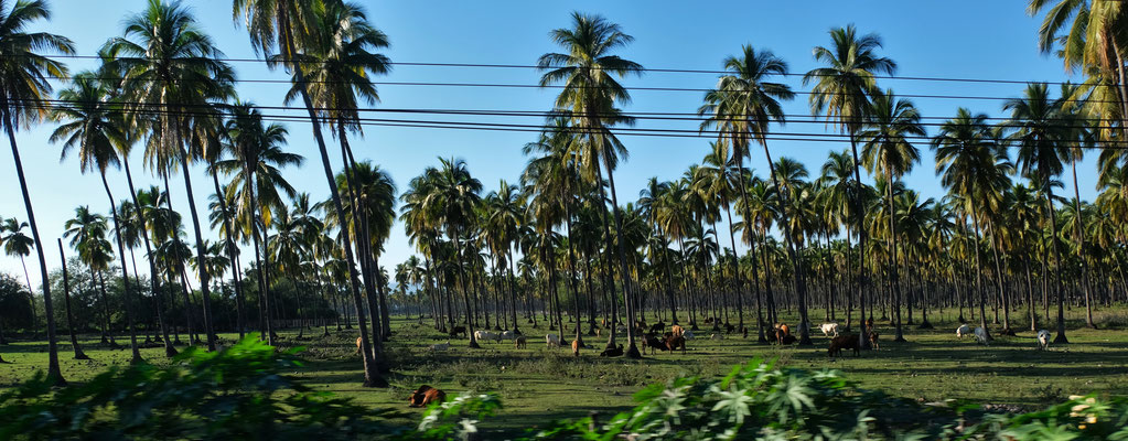Dann sind da wieder die Palmen...