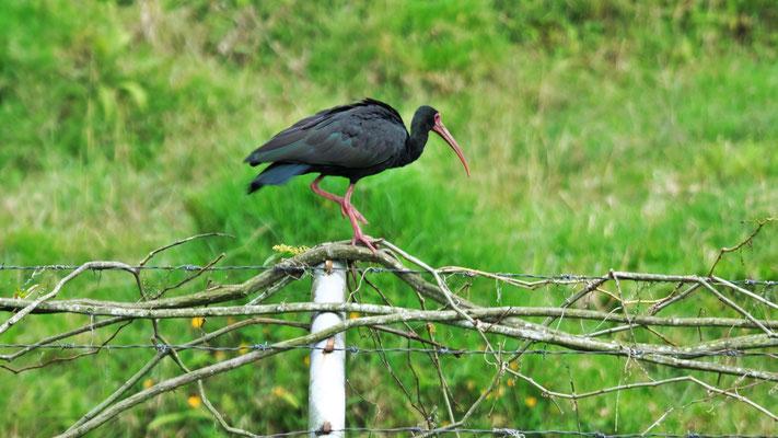 .... beobachten die Vögel