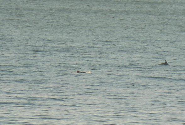 Nochmals eine Delfinshow am Vormittag